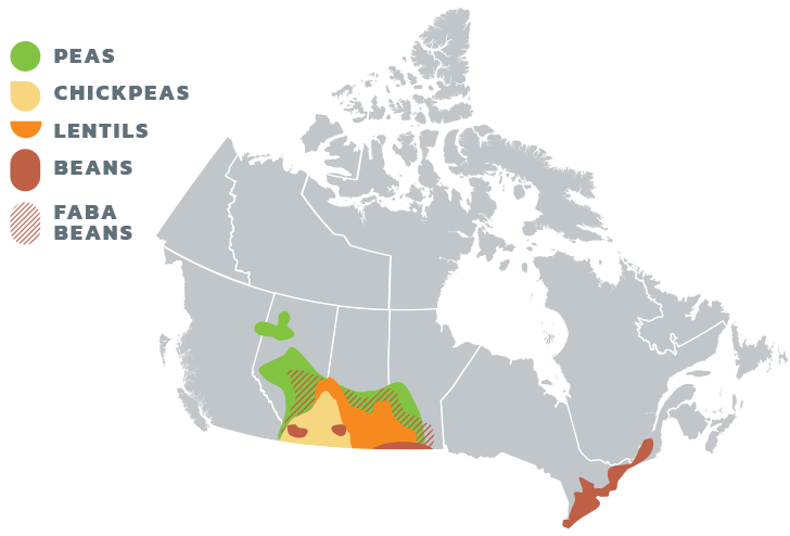 Pulses in Canada